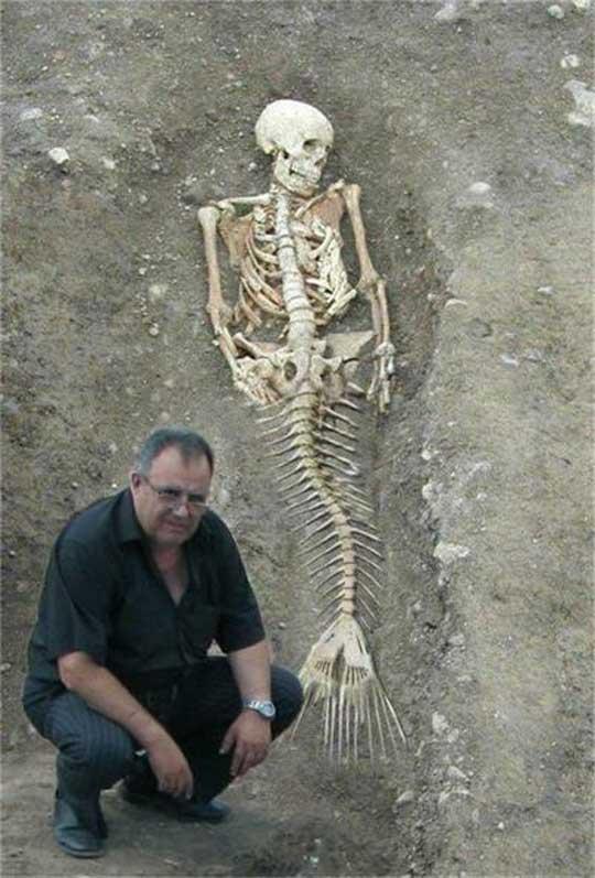 Sirena Esqueleto