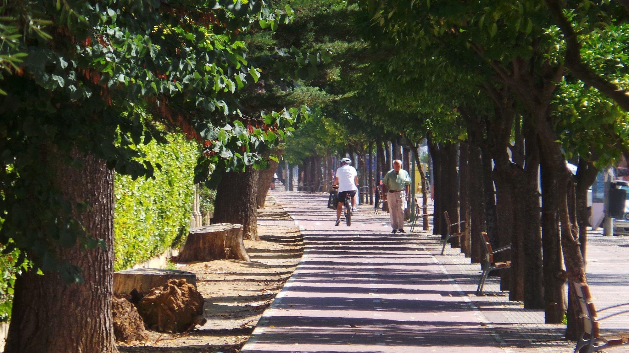 Carril Bici Avenida Jerez