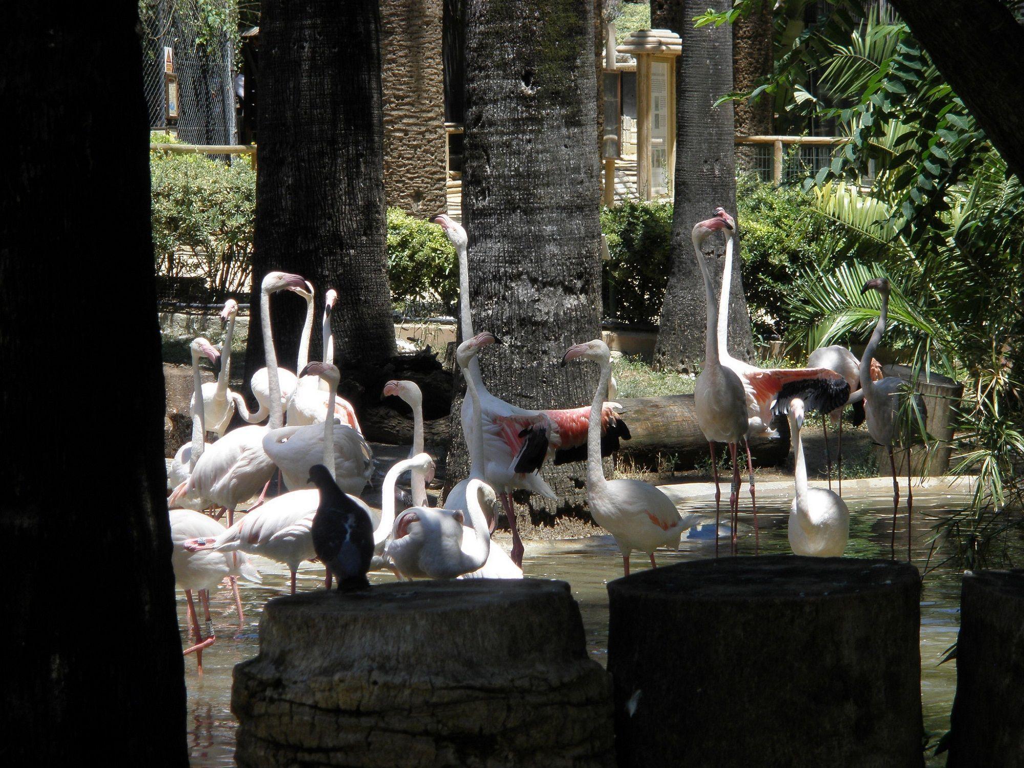 El sábado se celebra el Día de las Aves en el ZooBotánico de Jerez.