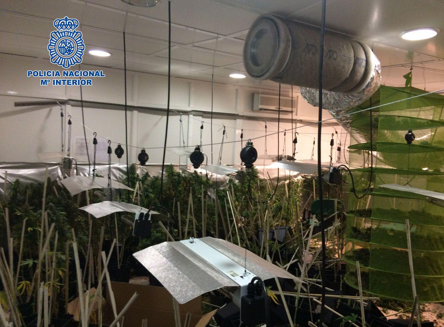 26-11-2015_Jerez marihuana 2