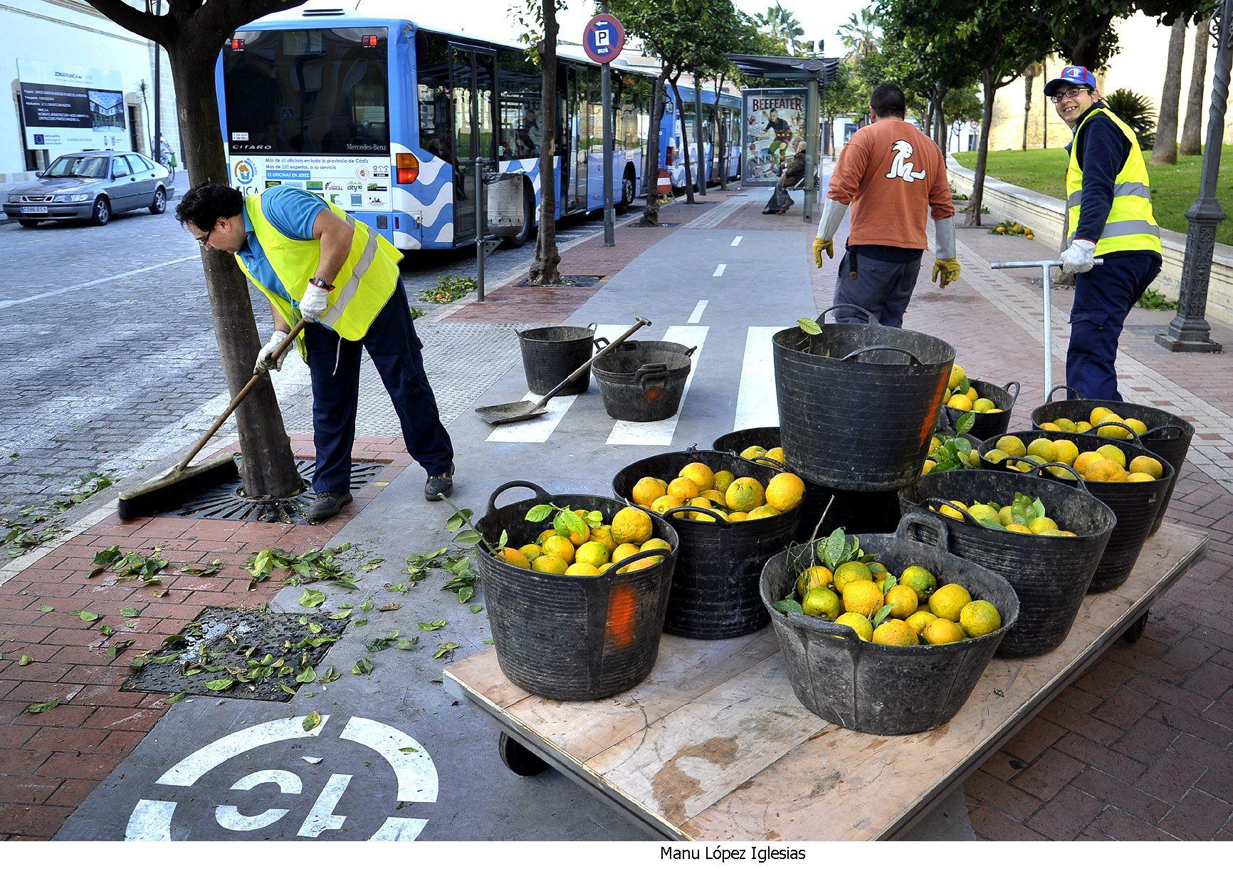 Recogida naranjas en San Agustin