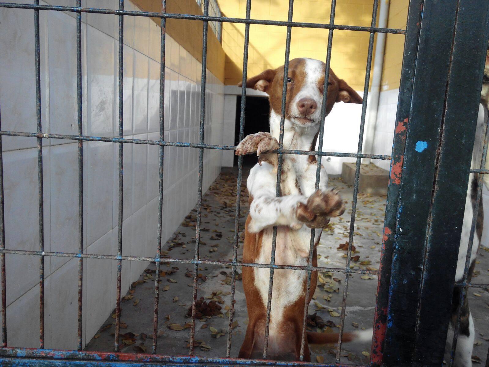 Las perreras de jerez viven una pesadilla y mamen s nchez mira para otro lado mira jerez - Perrera de vilafranca ...
