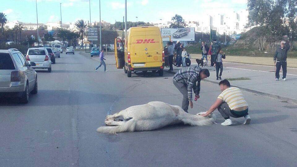 caballo atropellado en El Portal Jerez 5
