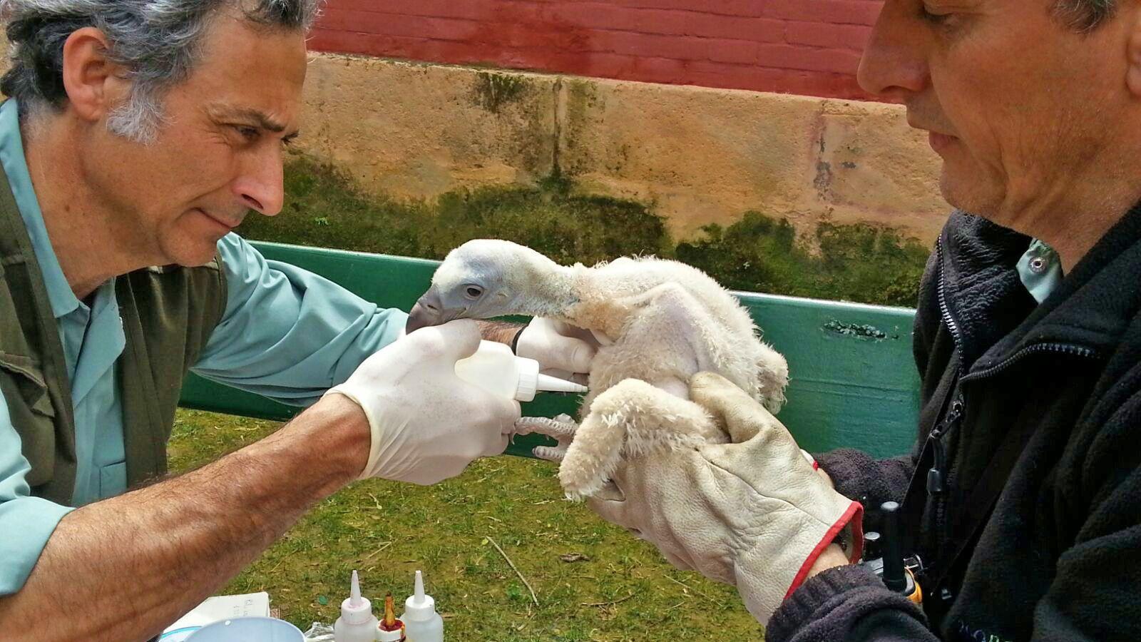 buitres zoo de Jerez