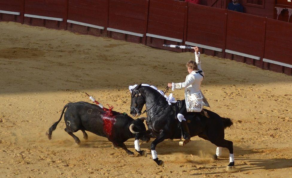 Ruy Fernández, rejonazo en tablas que hace doblar rápido; dos orejas; salida por la Puerta Grande.   Marciano Breña