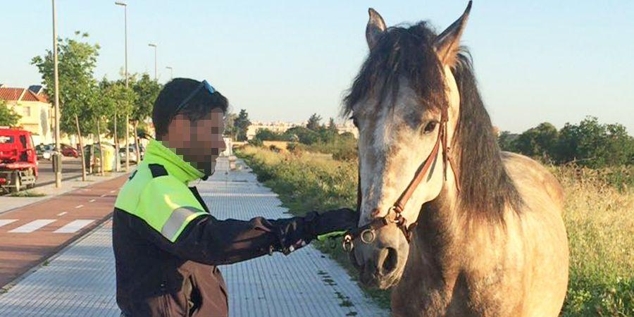 policia local caballo
