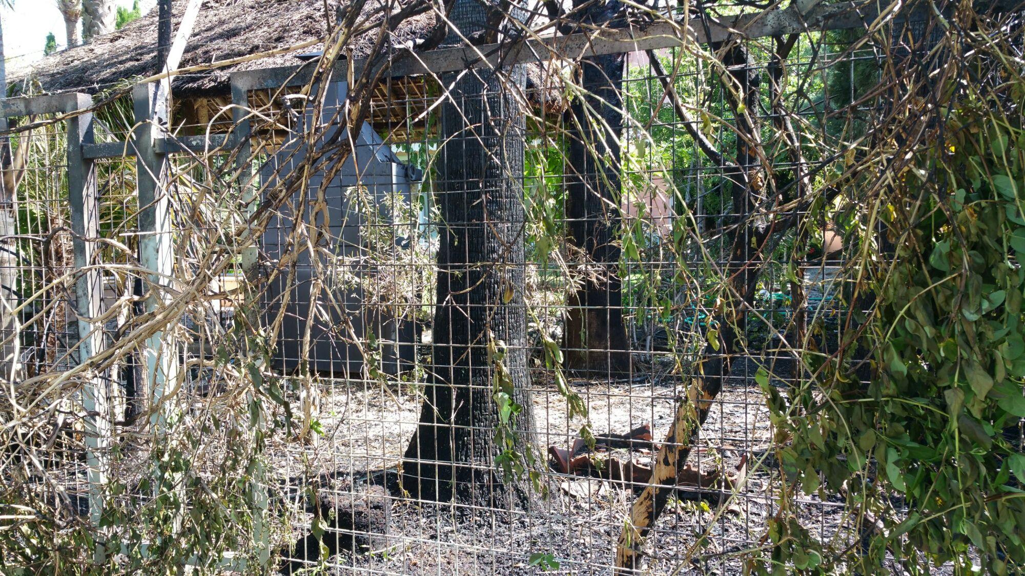 Imagen tras el incendio. Afectados el vallado, arbustos y árboles de chalet entre Avenida Andalucía y Calle Zeus | MIRA Jerez