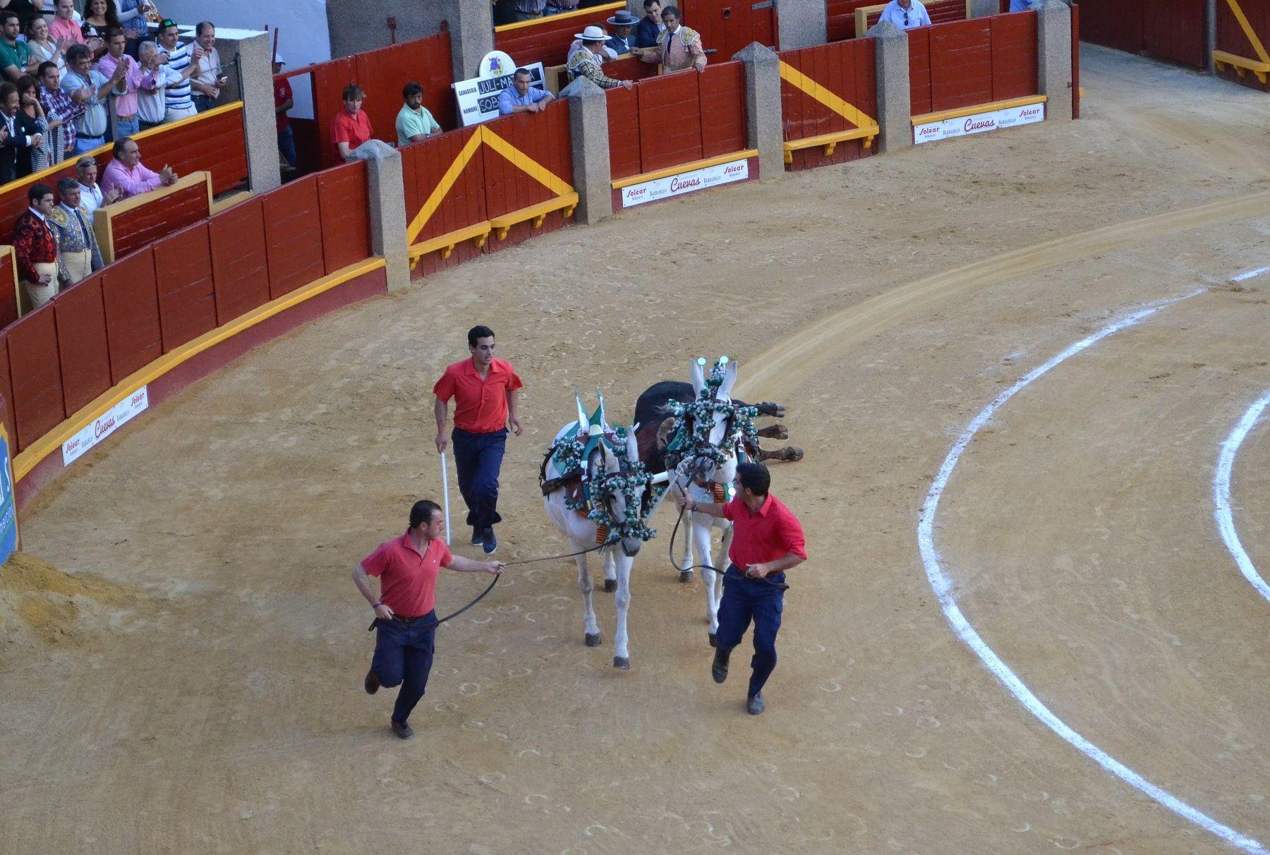 segundo toro de Roca Rey premiado en el arrastre