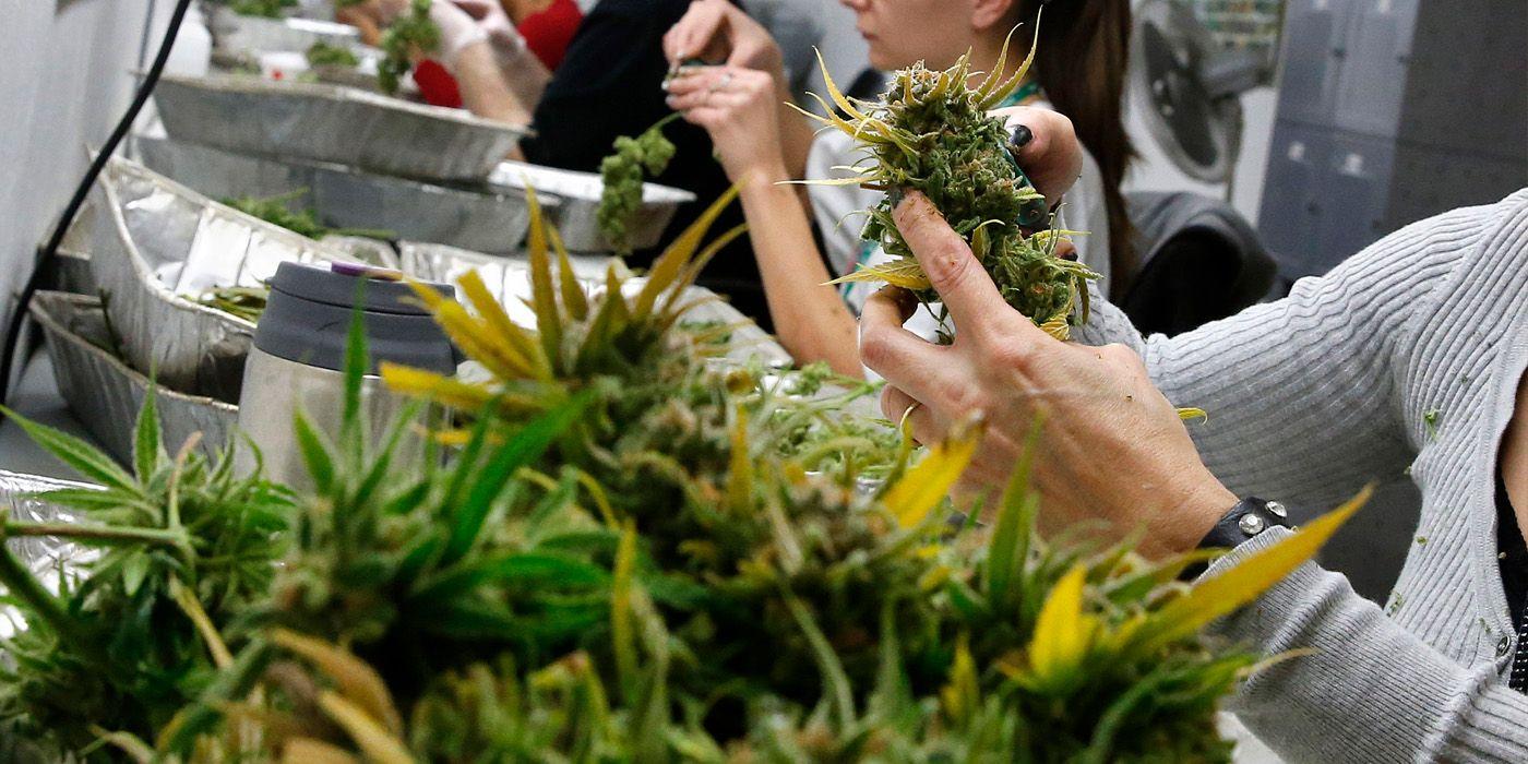 Plantacion Marihuana 3