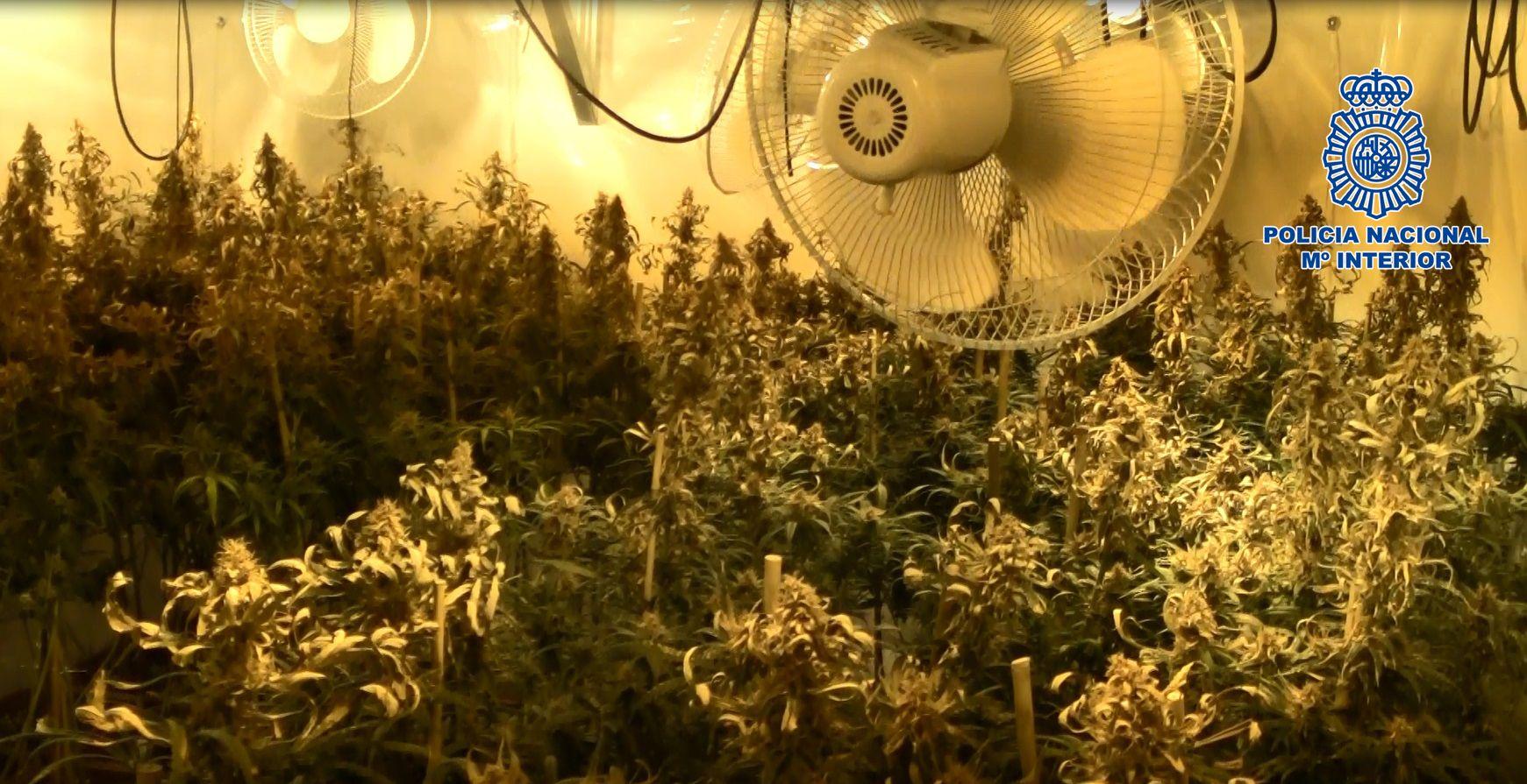 2016-07-05 Jerez Casa de la marihuana (1)
