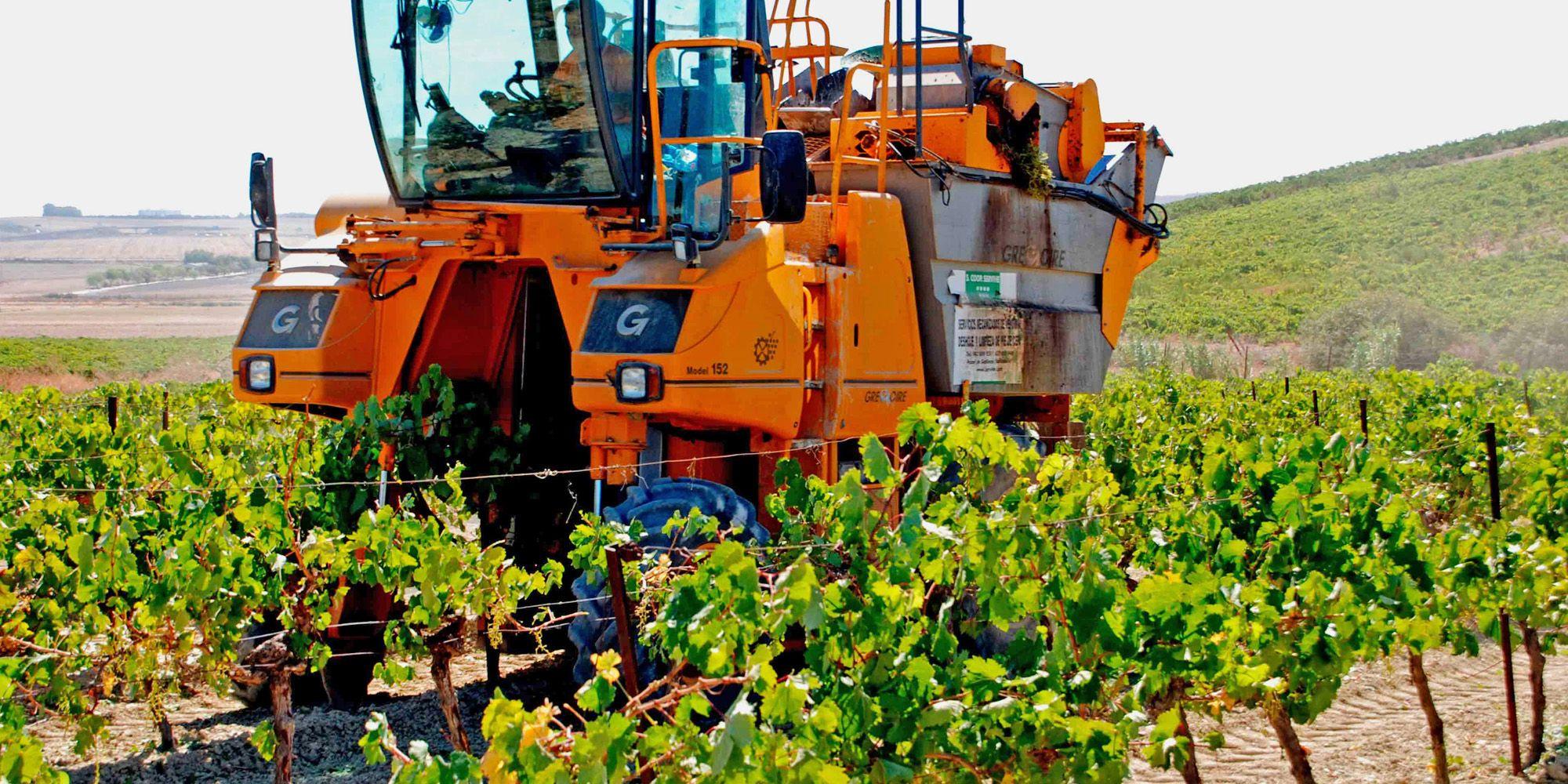 vino Jerez 3