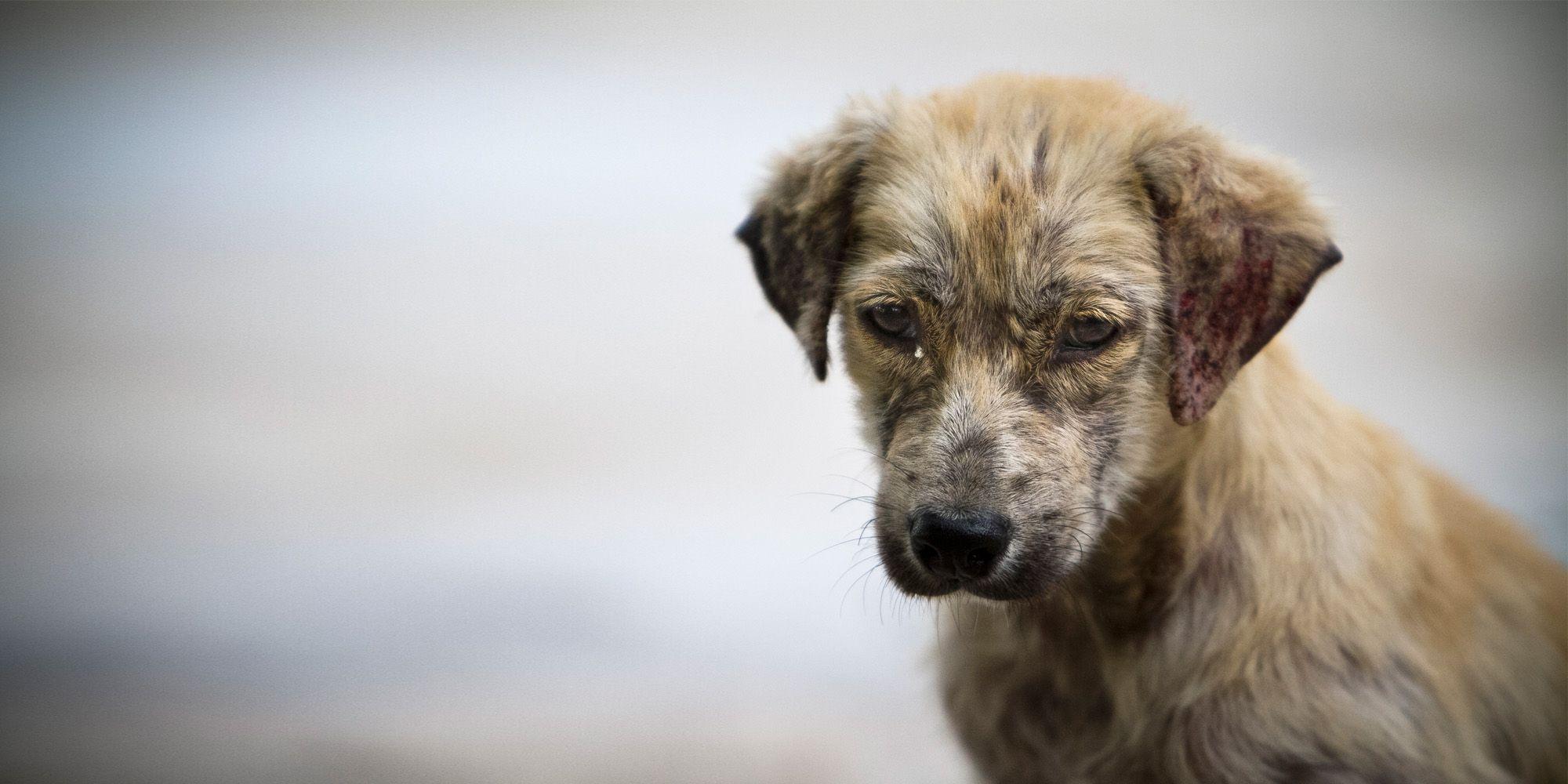 Perro abandonado, imagen de Xavier García.