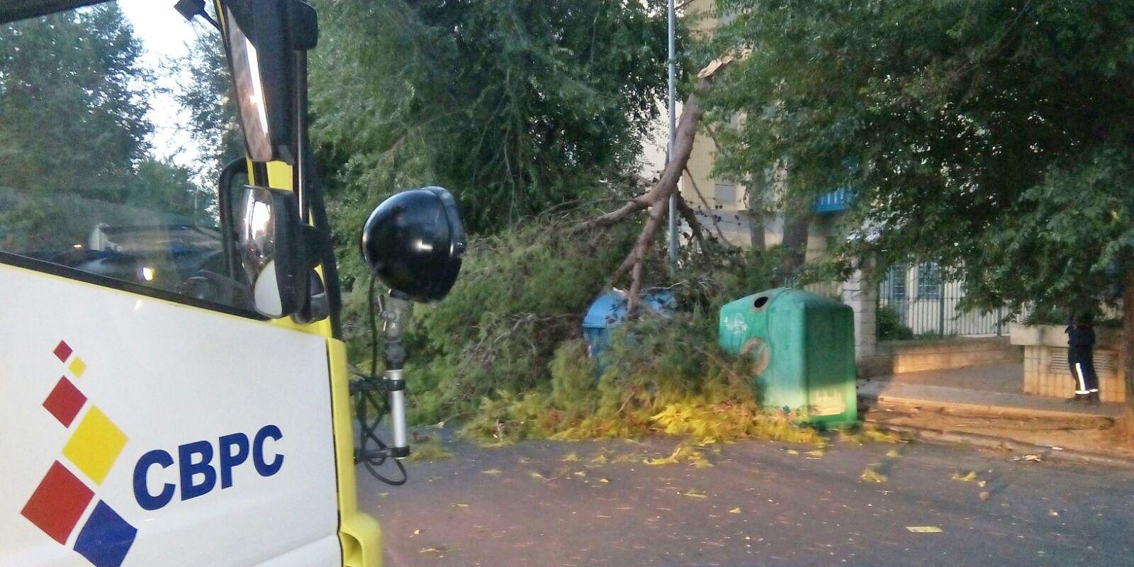 rama arbol caida en Jerez 2