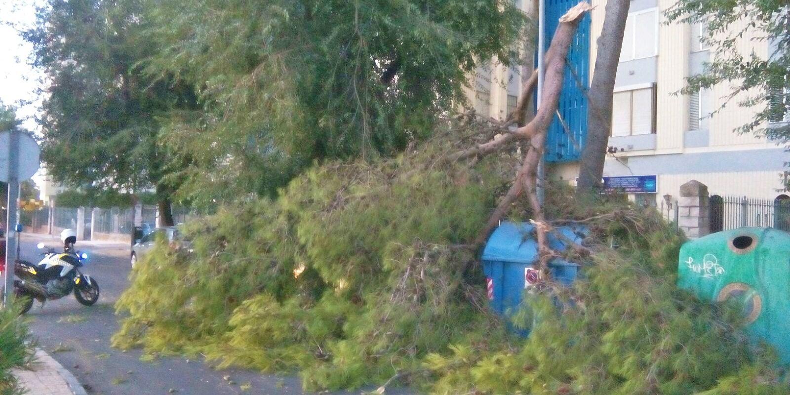 rama arbol caida en Jerez 3