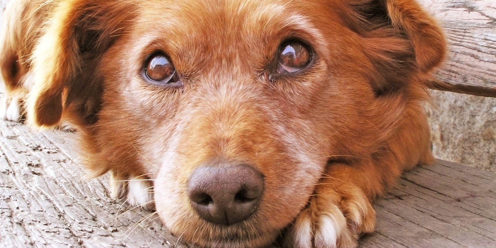 Ahorcan y mutilan a un perro en Córdoba