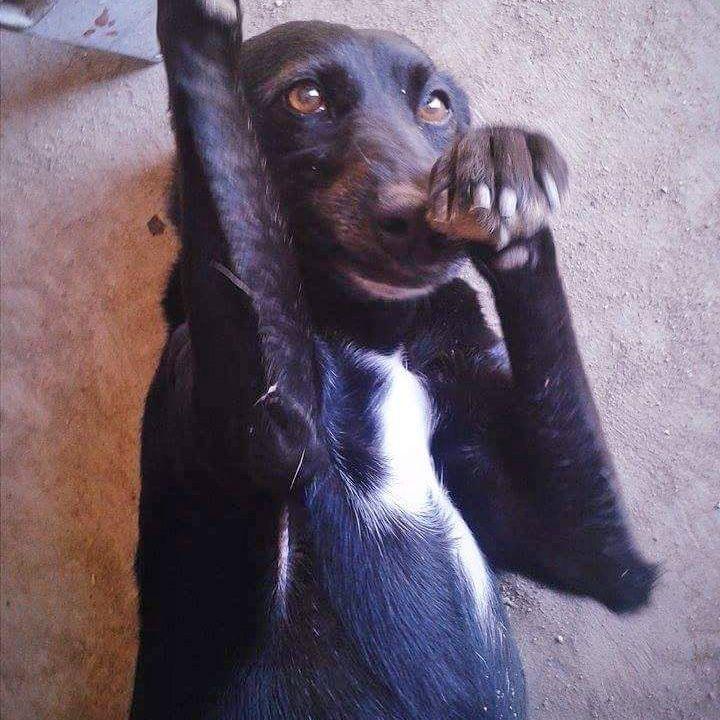 perros-protectora-4