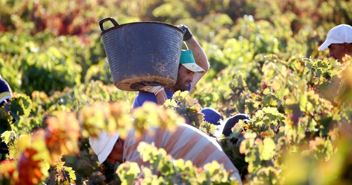 La Junta apuesta en Cádiz por la ganadería y agricultura ecológicas