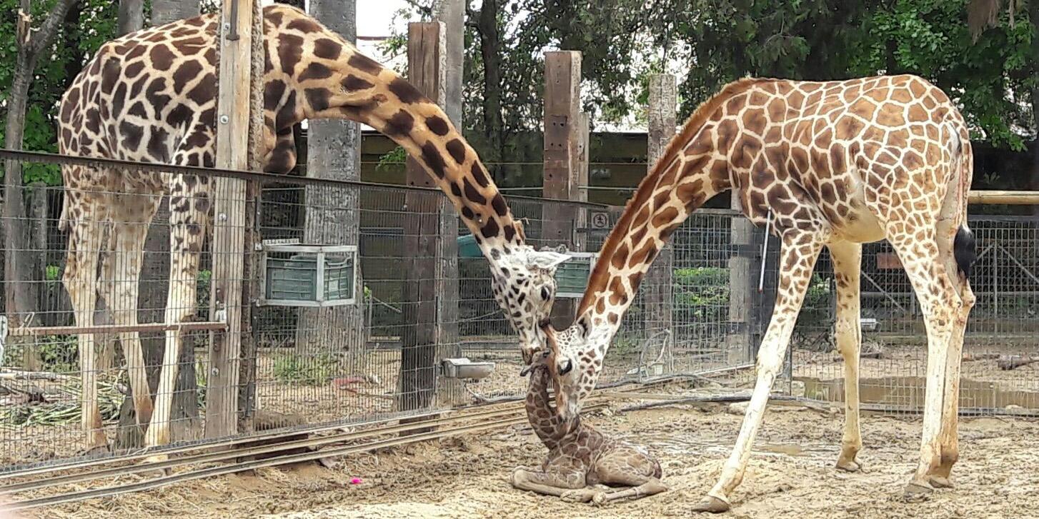El Zoo de Jerez se prepara para reabrir tras el brote de Fiebre del Nilo