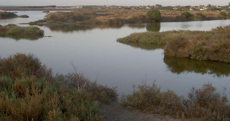 esteros noviembre Cádiz