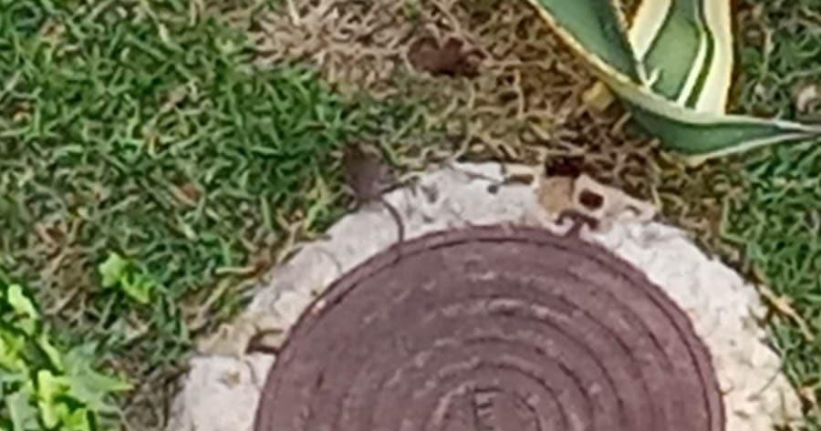Ratas en calle madre de dios jerez 3 el mira for Calle prado jerez 3 navacerrada