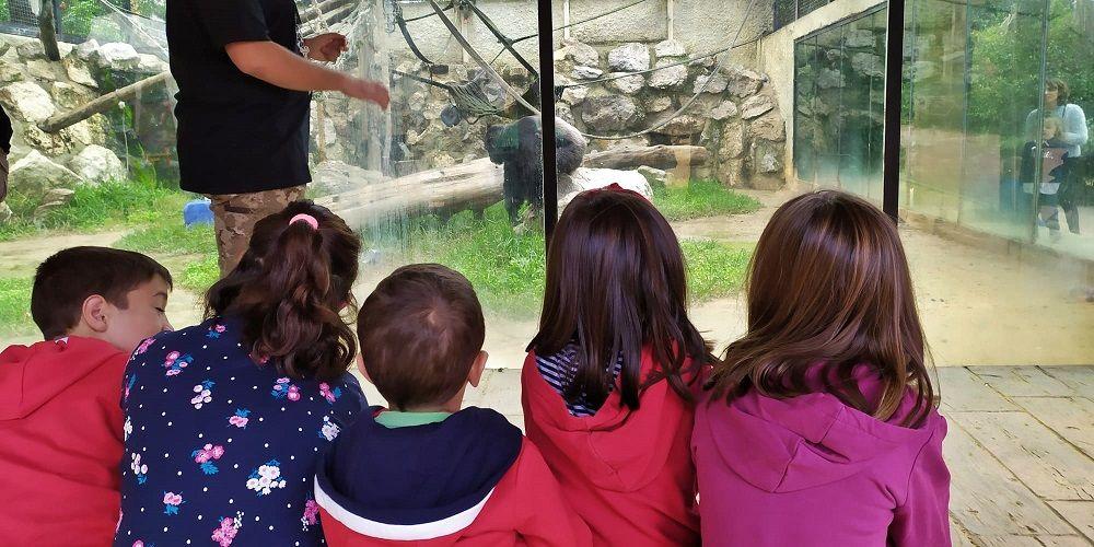 Zoo de Jerez: Vuelve a abrir sus puertas tras el brote de Fiebre del Nilo