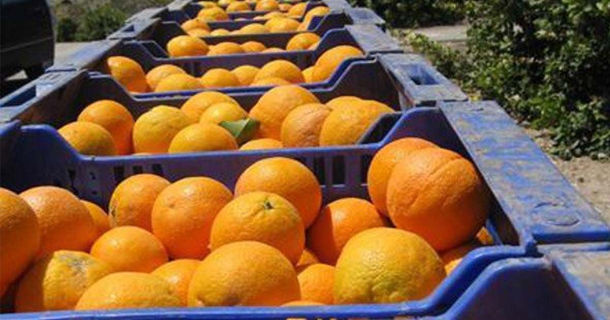 cítricos naranja