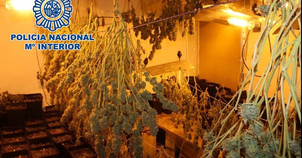 marihuana Policía Nacional casa málaga