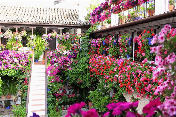 Patios de Córdoba: la edición más excepcional de su emblemático concurso