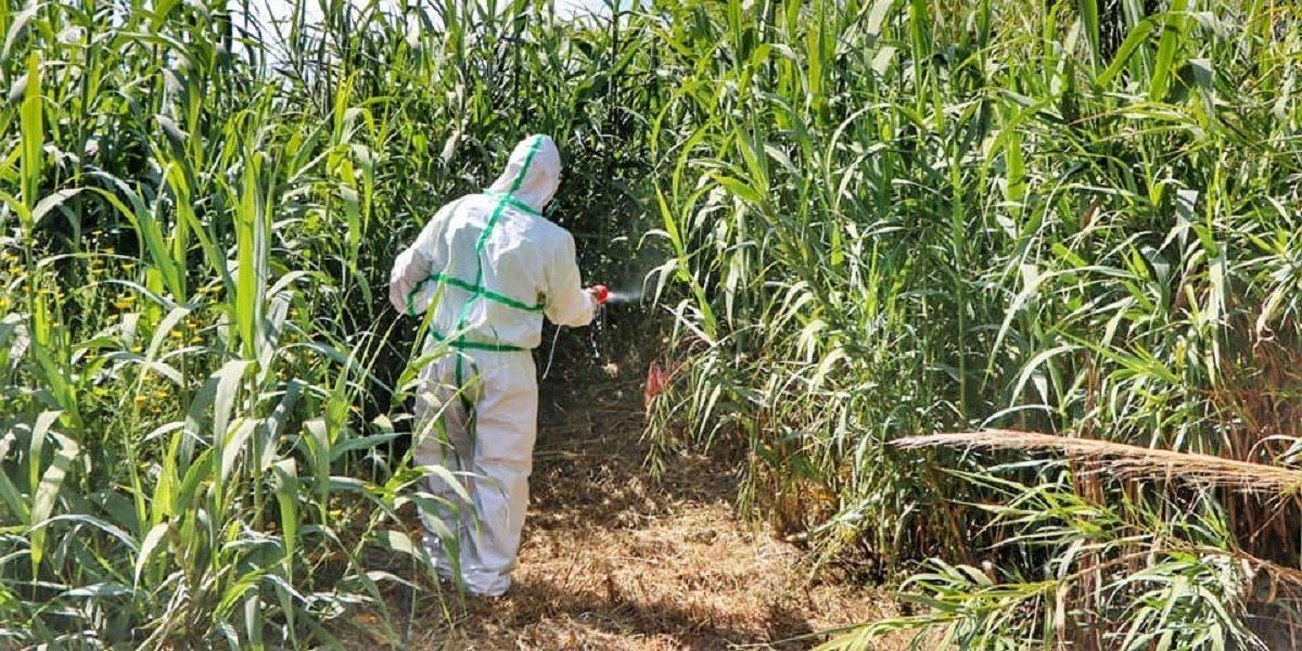 El Plan del Rincón de la Victoria contra la proliferación del mosquito tigre