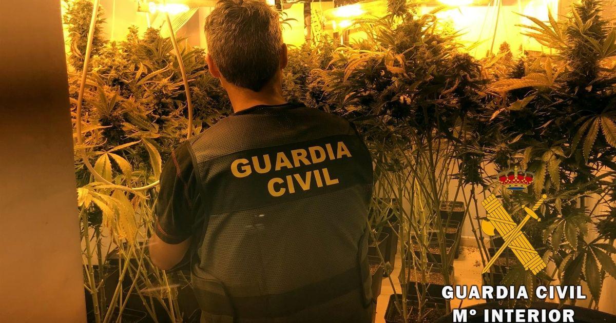 marihuana Gibraleón