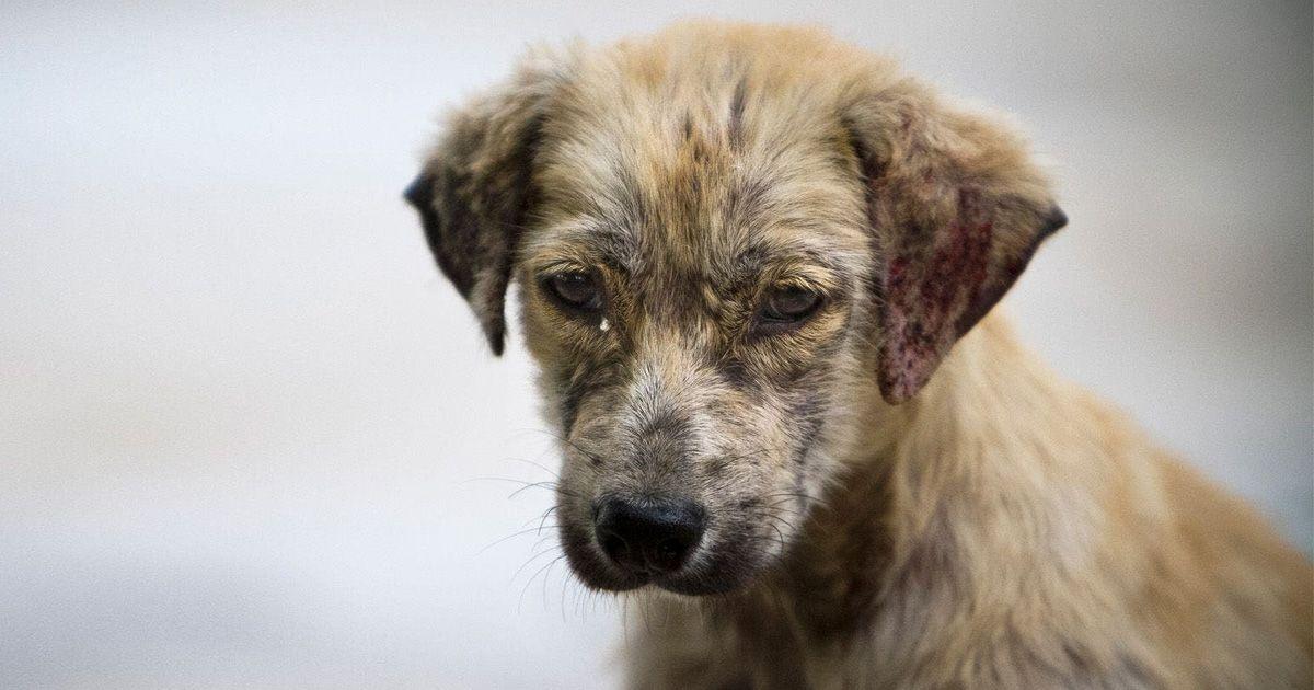 perro abandonado animal