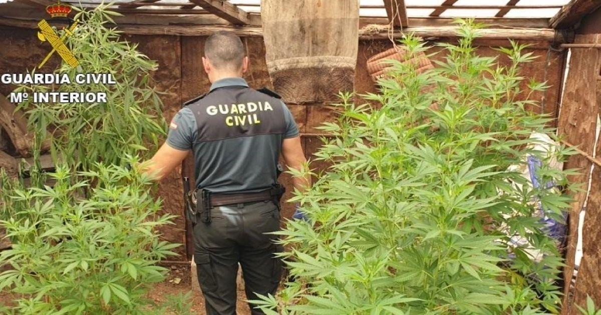 Plantación de marihuana en viviendas