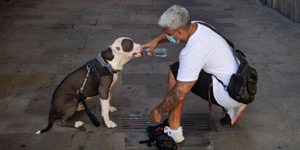 Andalucía contará con una nueva ley de Bienestar Animal