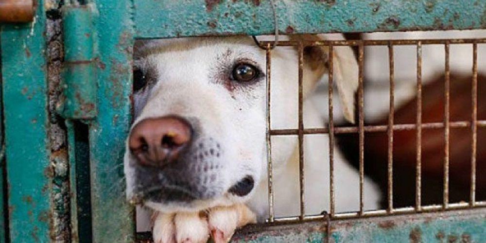 Piden un nuevo Código Penal para proteger del maltrato animal