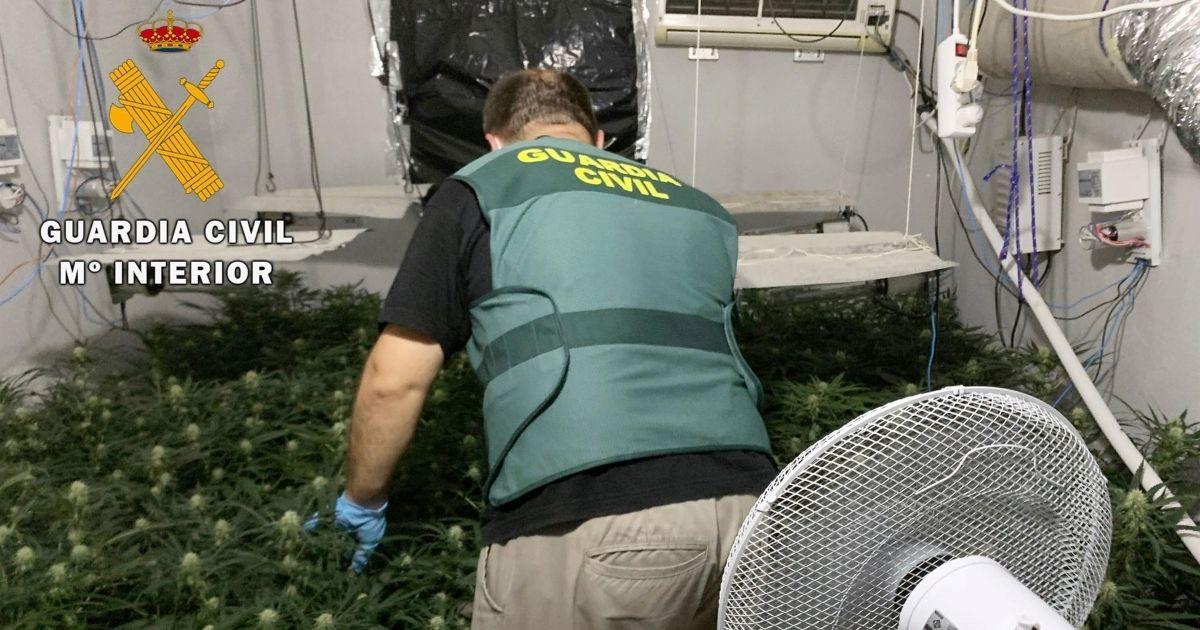 Desarticulado una plantación de marihuana en la provincia de Jaén