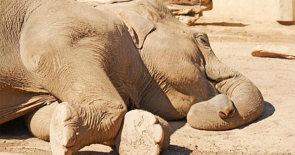 elefantes africa botsuana