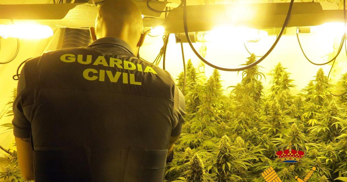 Desmantelado un cultivo con 189 plantas de marihuana en un pueblo de Almería