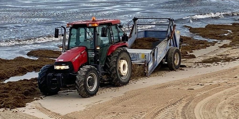 Retiran 400 toneladas de algas en Tarifa
