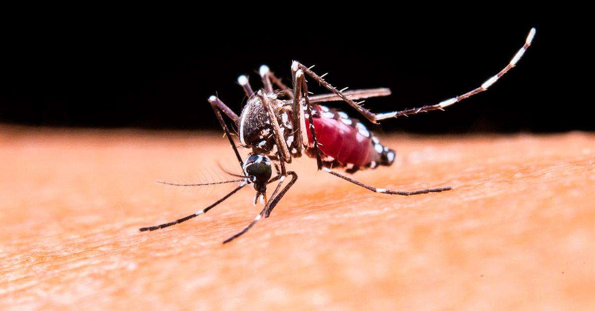 mosquito mosquitos virus fiebre del nilo vejer manuel flor cadiz virus del nilo