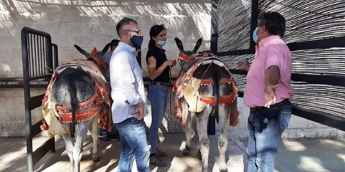El servicio de burro taxi de Mijas, en perfecto estado de salud