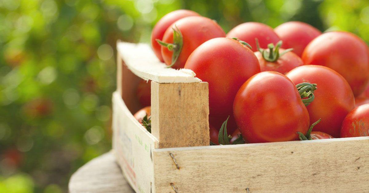 El tomate, un 'clasicazo' de la cocina en Andalucía