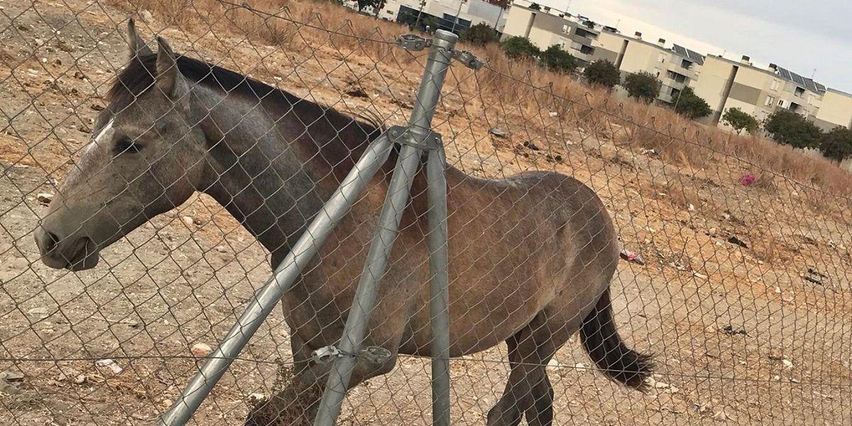 Denuncian el abandono de tres caballos en Jerez