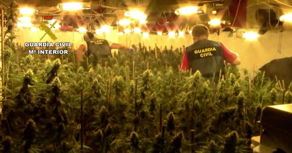 La Guardia Civil ha desarticulado en Córdoba una organización criminal dedicada al tráfico internacional de marihuana