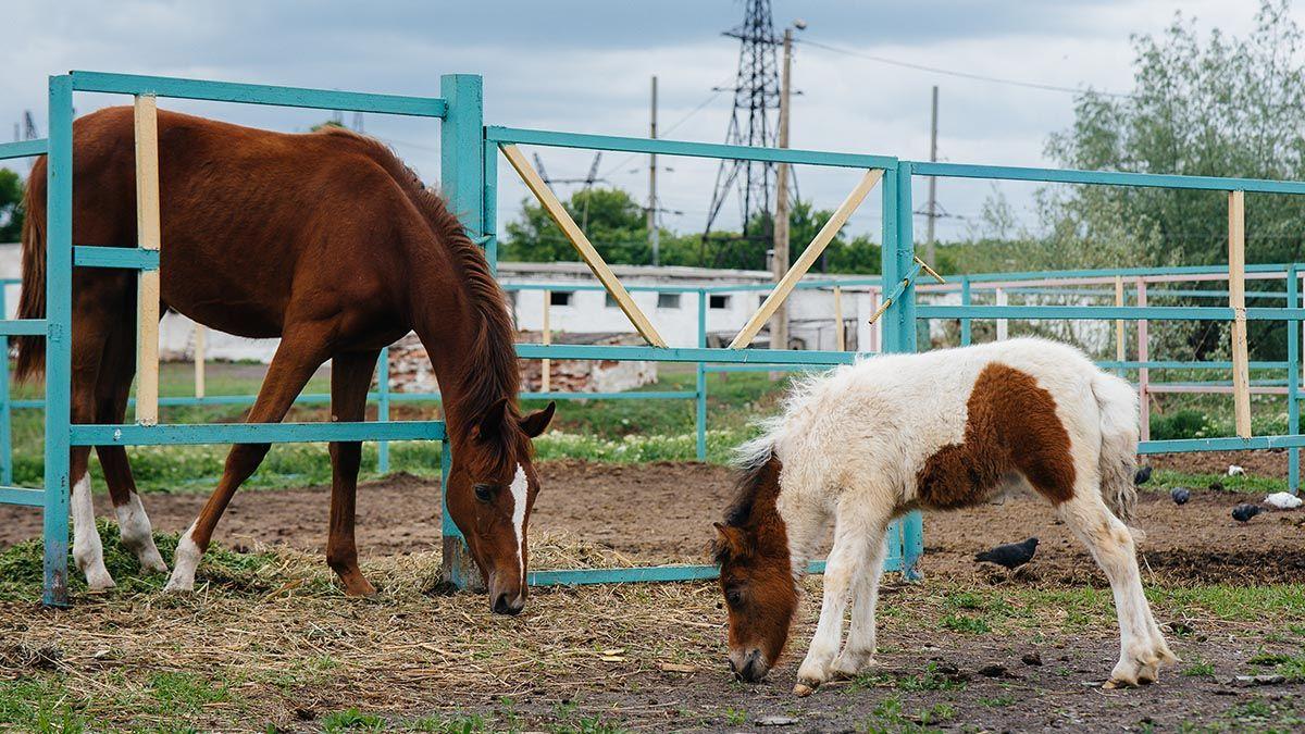 Pillan a un hombre borracho violando a un poni en una granja de Murcia