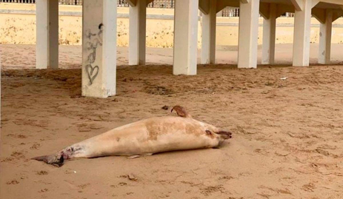 delfín playa Caleta