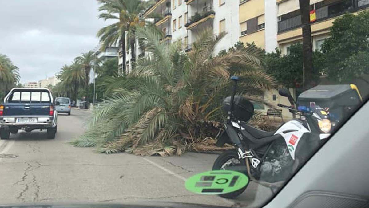 Palmera caída en Jerez viento