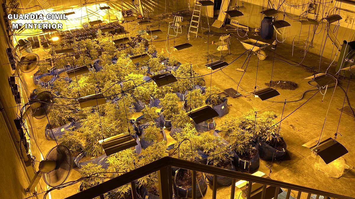 Plantas de marihuana en Encinas Reales (Córdoba)
