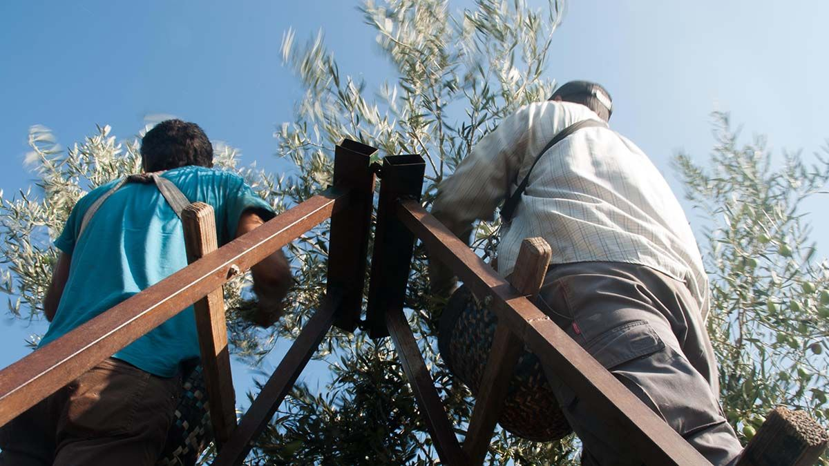 Trabajadores agrícolas campo Covid-19