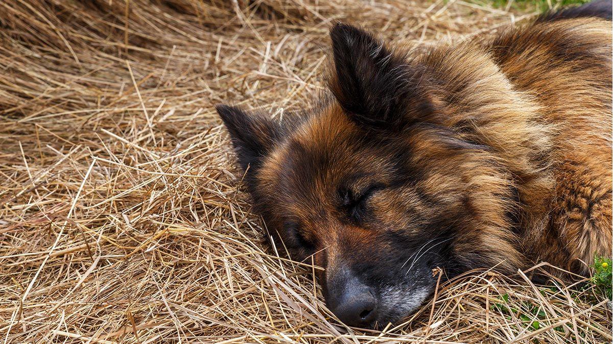 Un perro logra sobrevivir tras ser enterrado por sus dueños
