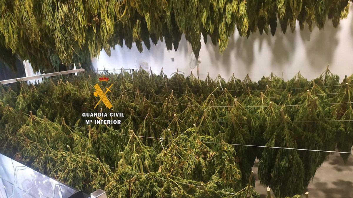Plantación marihuana en Coín (Málaga)